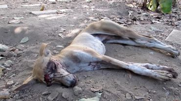 Kiedy zobaczyli tego psa, byli pewni, że nie żyje… Ciąg dalszy wydarzeń chwyta za serce!