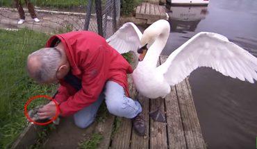 Mężczyzna chciał uratować pisklę zaplątane w siatkę. Reakcja jego matki była bardzo niespodziewana!