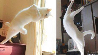 Zostawił w domu ukrytą kamerę. To, jak zachowywał się jego kot, przechodzi ludzkie pojęcie!