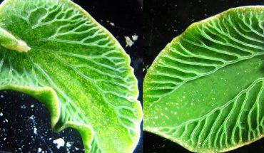 Wygląda jak pływający zielony liść, ale gdy przyjrzysz się bliżej, zobaczysz coś, co cię totalnie zaskoczy! WOW!
