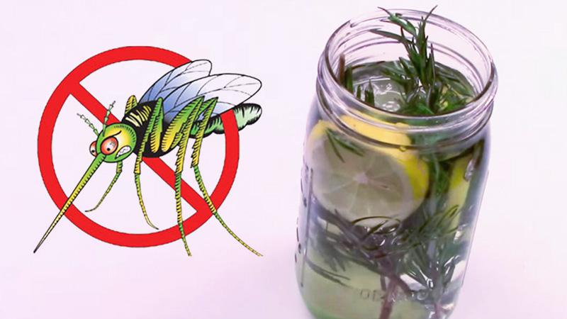 """Oto jak pozbyć się komarów i innych owadów, stosując naturalny """"odstraszacz"""". To naprawdę działa!"""