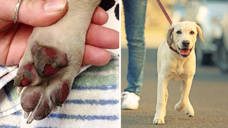 Po spacerze łapy tego psa zaczęły krwawić. Teraz jego właściciel ostrzega wszystkich, aby nie popełniali podobnego błędu!