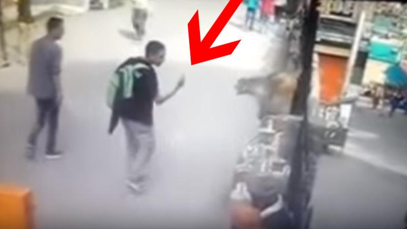 Turysta pokazał małpie wskazujący palec. Nie musiał długo czekać na jej odpowiedź!