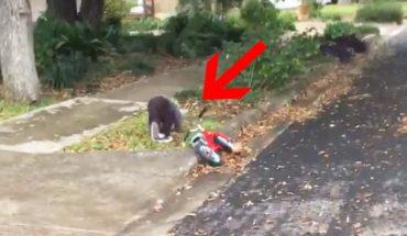 Mały chłopczyk rozpędził się na rowerze i wpadł na krawężnik. Gdy zobaczysz, kto przybył mu z pomocą, z pewnością się uśmiechniesz