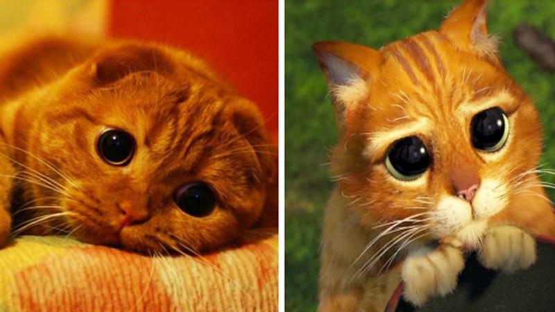 Zwierzęta z filmów animowanych naprawdę istnieją! Nie wierzysz? Sprawdź sam!