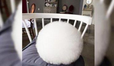 Wygląda jak ogromny bawełniany wacik, jednak przyjrzy się dokładnie. To zaczyna się ruszać!
