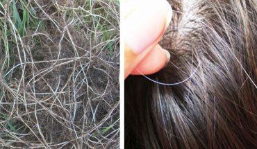 Naturalny sposób przeciwdziałający siwieniu włosów. Pomoże ci popularny chwast!