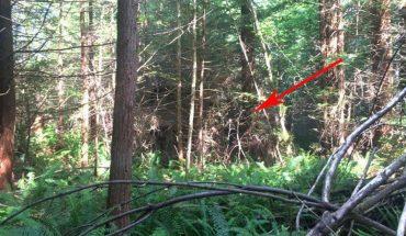 Pracował w rzadko uczęszczanej części lasu, nie spodziewał się, że odkryje takie coś!