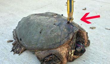 Ktoś chciał zabić tego starego żółwia w najgorszy z możliwych sposobów. Jak można być tak okrutnym?