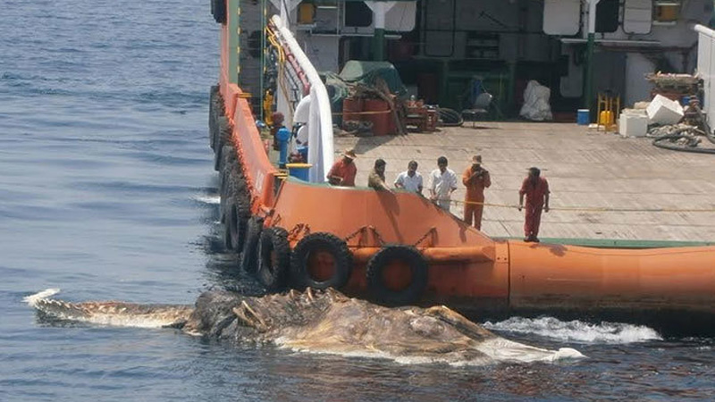 Żeglarze znaleźli tajemnicze stworzenie morskie pływające obok łodzi, mimo lat doświadczenia nie potrafili stwierdzić, co to takiego!