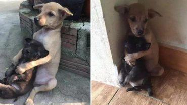 Uratowali dwa szczeniaki błąkające się po ulicy. Ich zachowanie poruszyło wszystkich do głębi…