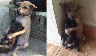 Bezdomne szczeniaki przytulały się na ulicy. Ich zachowanie poszyło miliony serc