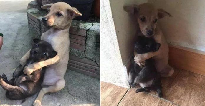 puppy-hugs-friend-696x362