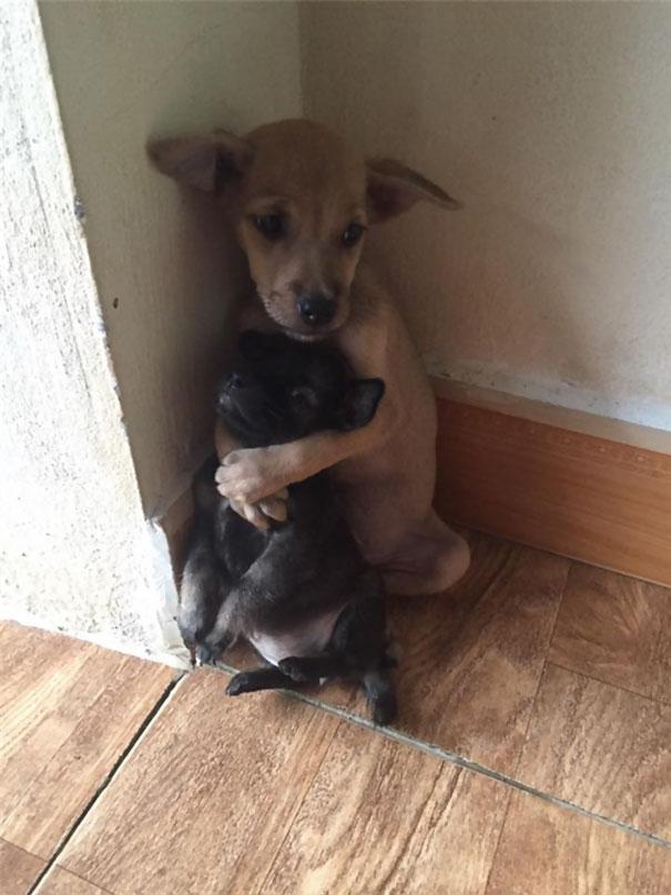 puppy-hugs-friend0