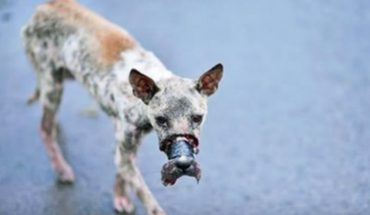 Zakleili jego pysk taśmą i wypuścili go na ulicę. Nie wiadomo, ile musiał znosić te tortury!