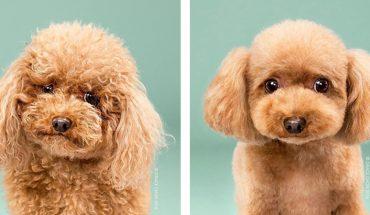 Psy po wizycie u fryzjera. Zobacz, ich niesamowitą metamorfozę!