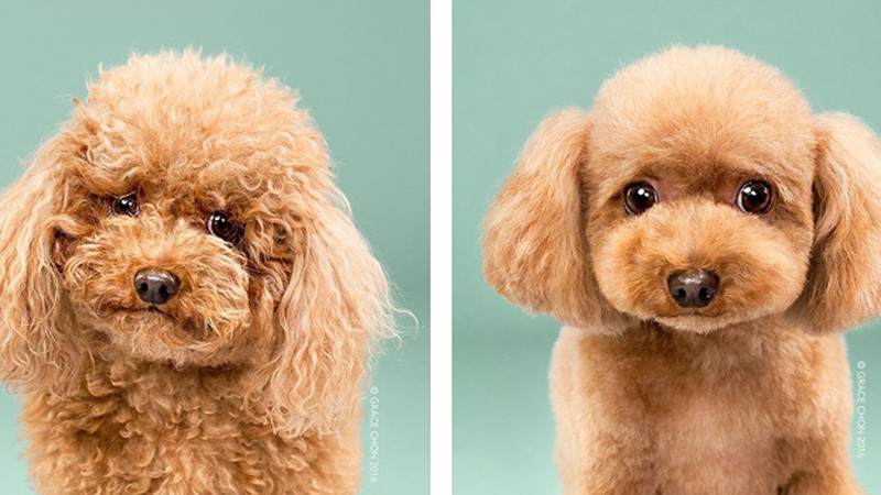 transformations-of-dog
