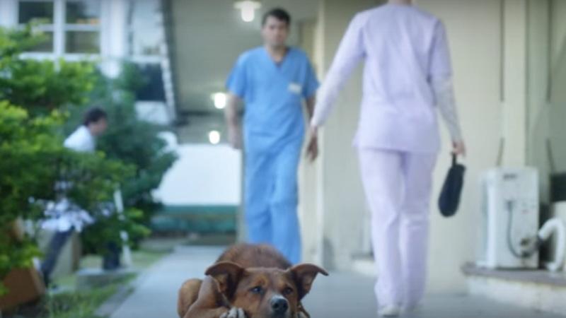 dog-hospital