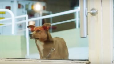 Pies czekał na właściciela przed szpitalem. Kiedy zdał sobie sprawę, że już nie wróci, zrobił coś, co chwyta za serce