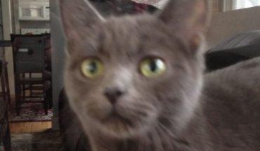 Kot włamał się do domu tego mężczyzny i nieźle narozrabiał