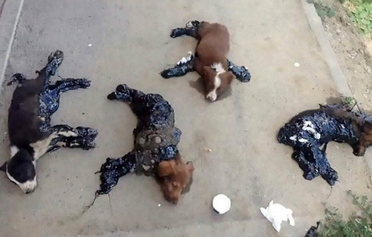 puppies in tar