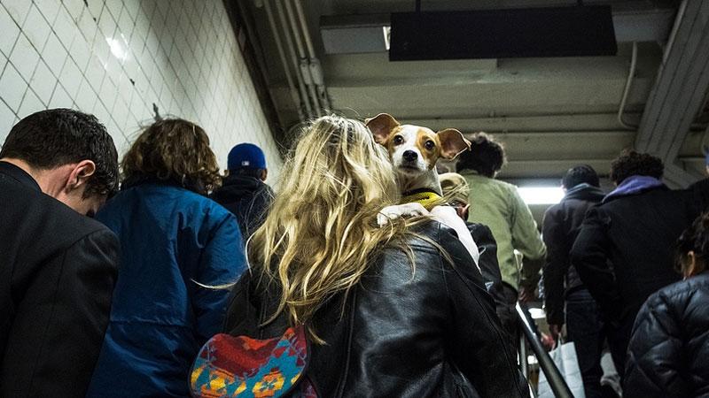 Nowojorscy właściciele zwierząt w zabawny sposób przestrzegają przepisów kolejki metra. Czy będzie z tego nowa moda?