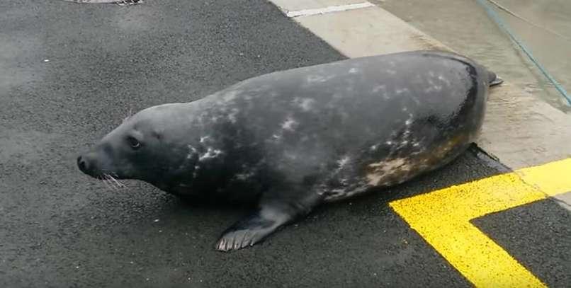 seal Sammy (5)