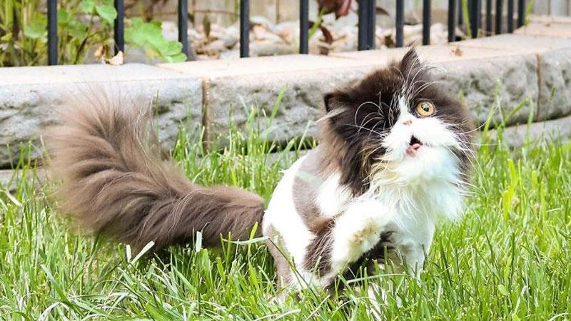 Spaghettio to słodki kociak, który w wypadku stracił oko, ale nie ciekawość świata