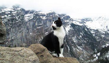 Mężczyzna zgubił się w szwajcarskich Alpach i wtedy na jego drodze stanął ON. Udowodnił, że również koty są świetnymi przewodnikami