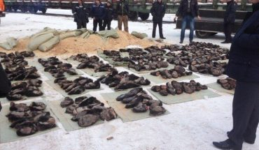 Rosyjska policja podejrzewała, że w tych workach znajduje się coś nielegalnego. Okropna niespodzianka zwaliła ich z nóg!
