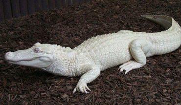 32 przykłady występowania bielactwa wśród zwierząt. Sprawdźcie, jak ważny kolor i ile zmienia jego brak