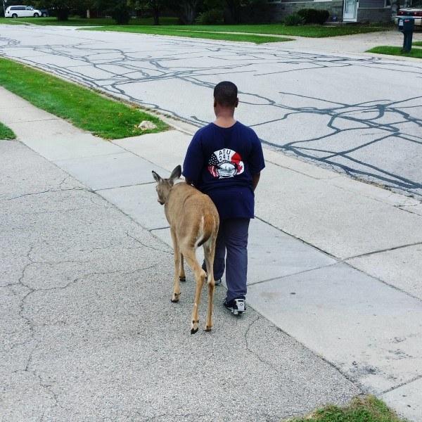 blind-deer1
