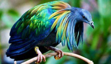 Ludzie zabijają te piękne ptaki dla biżuterii. To przerażające, ale niedługo mogą wyginąć!