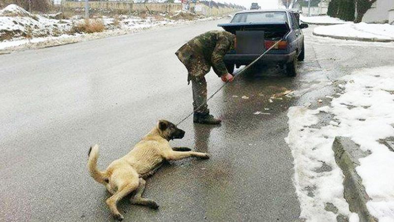 """Ciągnął psa za samochodem, aby """"rozprostować mu kości"""". Okrucieństwo niektórych ludzi nie zna granic"""