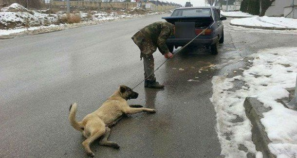 he-dragged-the-dog-by-car1