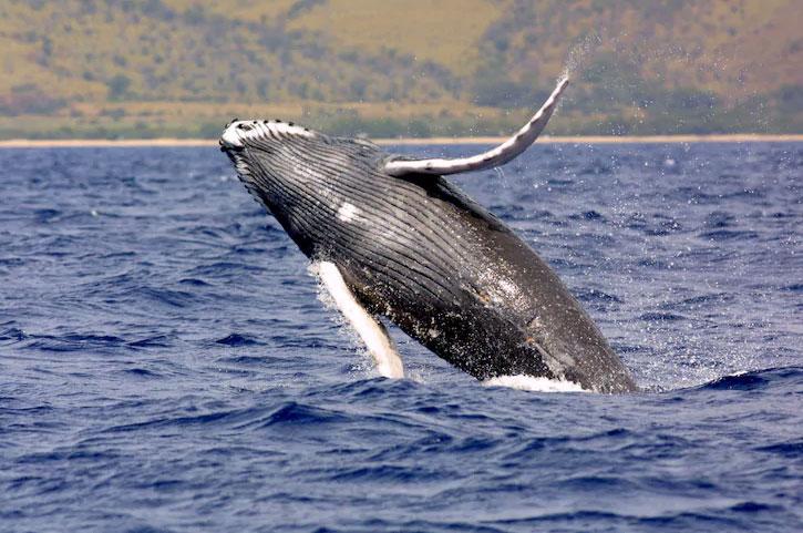 dead-whale-4