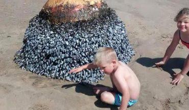 Zadowoleni rodzice robili zdjęcia dzieciom z dziwnym przedmiotem znalezionym na plaży. Dopiero później dowiedzieli się strasznej prawdy