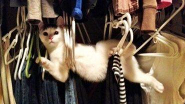 Właśnie przez takie zdjęcia internet pokochał koty i ich dziwaczną naturę. Uśmiech podczas oglądania gwarantowany