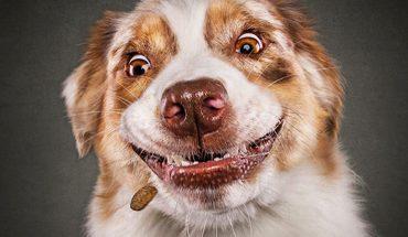 Ekspresyjne zdjęcia psów, próbujących złapać w powietrzu ulubione przysmaki