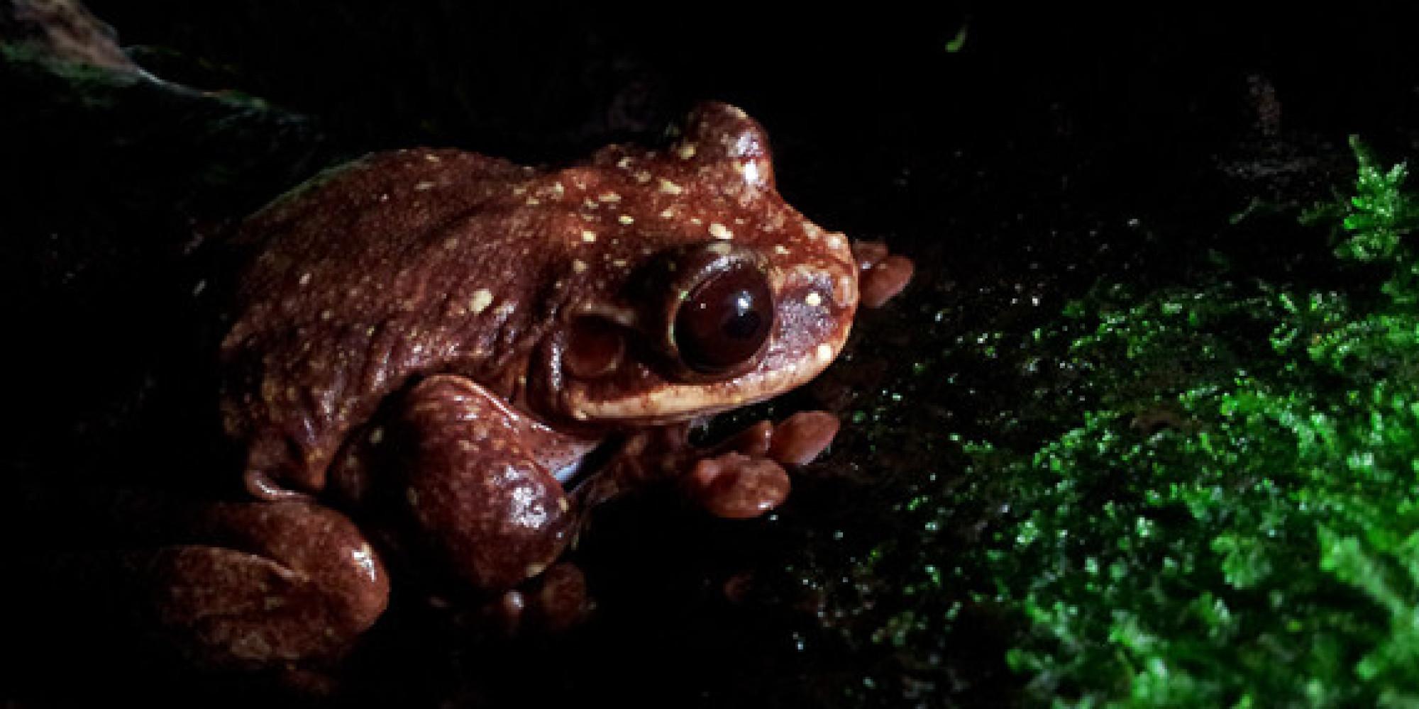 o-tree-frog-facebook