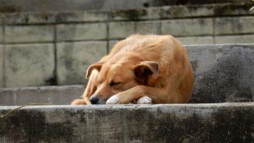 Chilijska pani burmistrz znalazła świetny sposób na rozwiązanie problemu bezdomnych psów. Kazała je wyłapać i… dała im pracę!