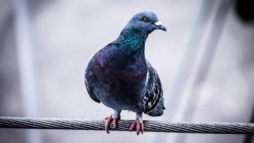 W kazańskiej piekarni kamery zarejestrowały, jak maszyny razem z ziarnem zasysają gołębie! W Rosji to nawet chleba strach skosztować