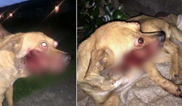 Ktoś włożył temu psu w pysk odpaloną petardę. Nie sposób sobie wyobrazić, przez co musiał przejść to biedne zwierzę