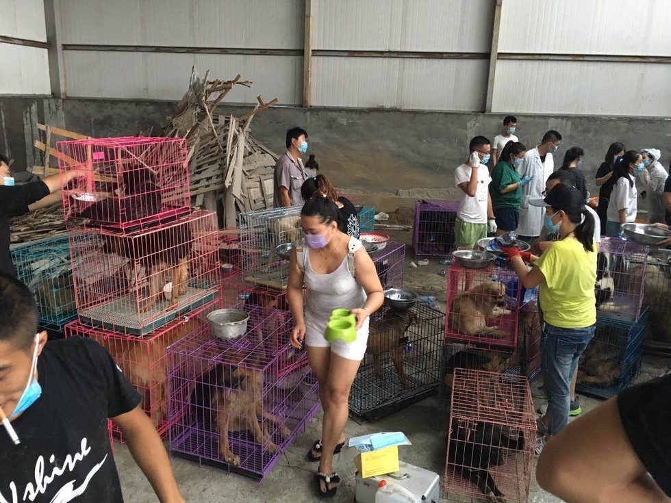 saved-from-the-slaughterhouse-dogs-7