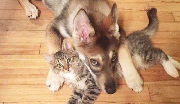 Kobieta zabrała swojego psa do schroniska, by razem z nim znaleźć mu kompana. Niespodziewanie zwierzak wybrał… kota!