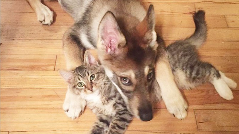 Kobieta zabrała swojego psa do schroniska, by razem z nim znaleźć mu kompana. Niespodziewanie zwierzak wybrał... kota!
