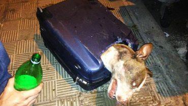 Opiekun wepchnął go do walizki i wyrzucił niedaleko śmietnika. Był bardzo zdziwiony, że zwierzę wciąż żyje!