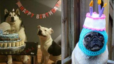 Wszyscy lubią urodzinowe imprezki, również zwierzęta. Zobaczcie, jak różni domowi pupile świętują swój wyjątkowy dzień