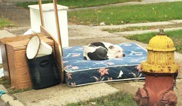 Ten pies został porzucony wraz ze śmieciami podczas przeprowadzki. Czuwał przy nich ponad tydzień, licząc, że właściciele wrócą!