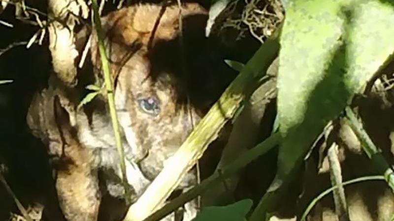 Mieli ostro imprezować na biwaku, ale to, co znaleźli w lesie całkowicie zmieniło ich plany